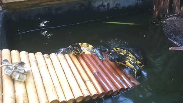 Les tortues de Luc Dsc_0110