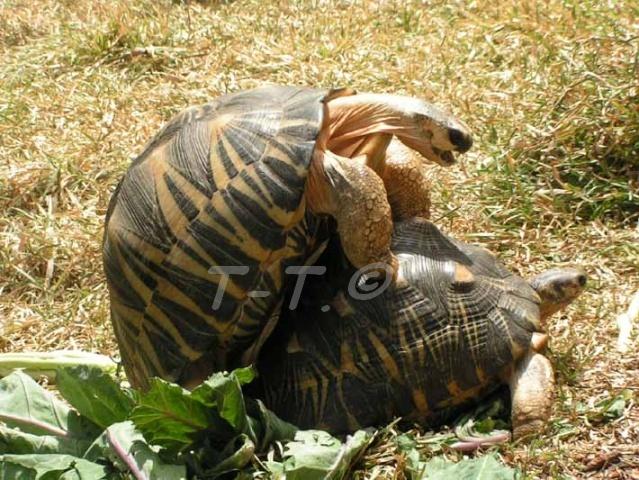 Les tortues de Luc Rad_lu10