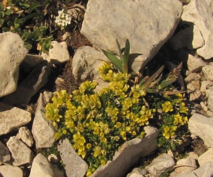 Dolomites (j4)Passo Pordoi  Img_4014