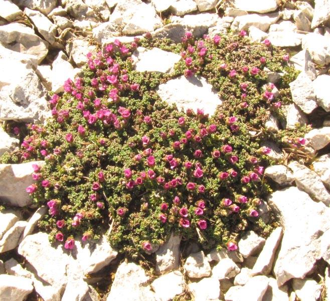 Dolomites (j4)Passo Pordoi  Img_4025