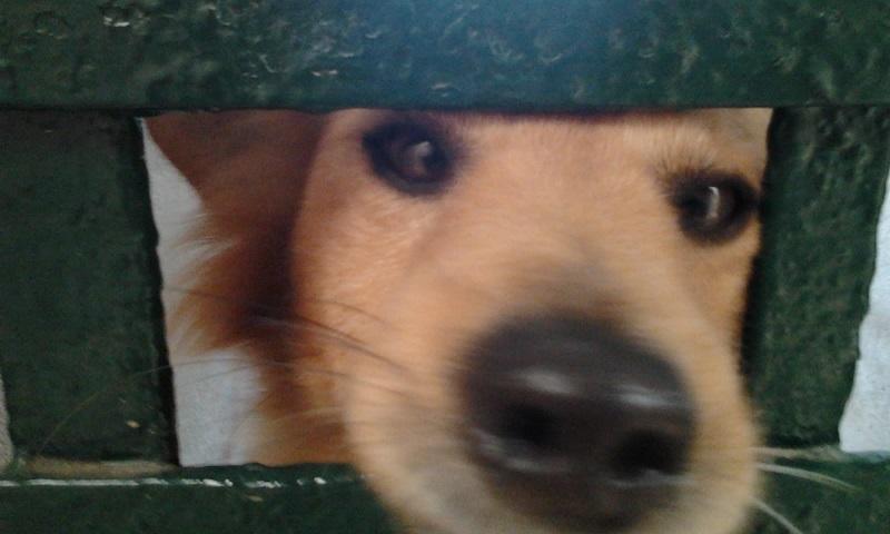 Adoption d'un chien - Page 3 Photo514