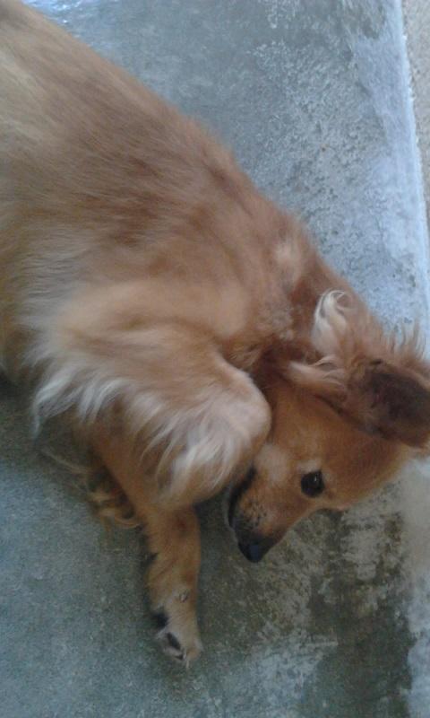 Adoption d'un chien - Page 3 Photo515