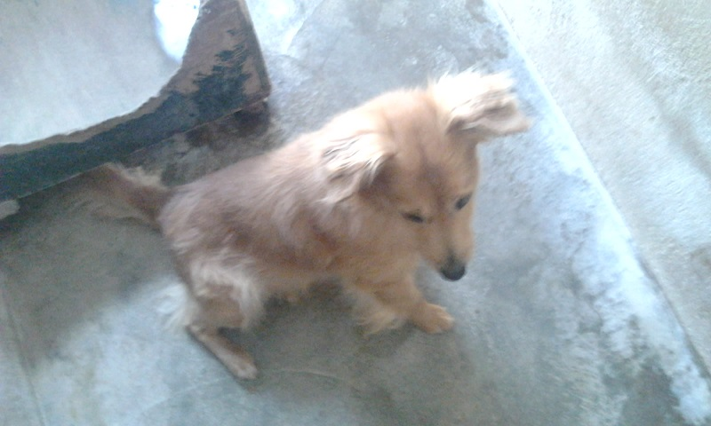 Adoption d'un chien - Page 3 Photo516