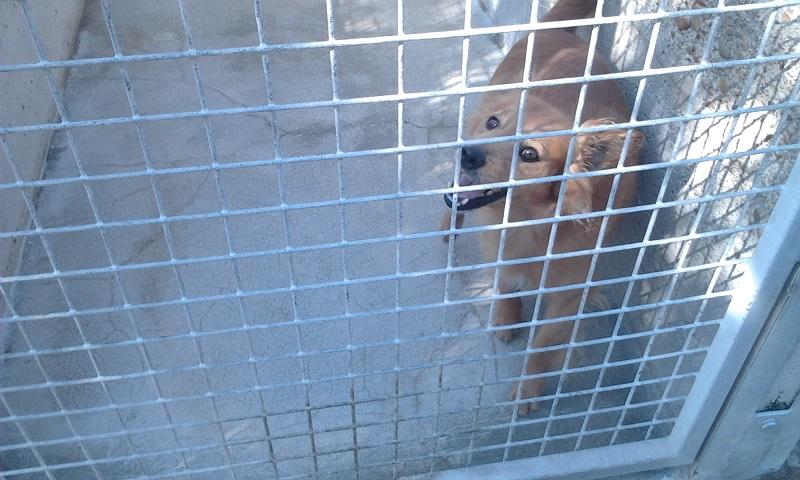 Adoption d'un chien - Page 3 Photo517