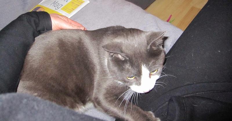 jacadi - JACADI, chat européen gris & blanc, né en déc 2014. Jacadi29