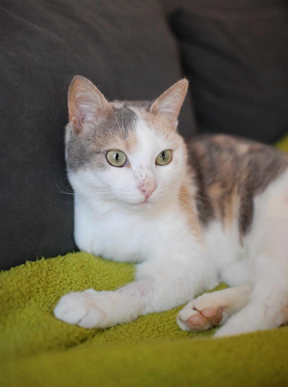 jouba - JOUBA, chatte européenne tricolore, née en 2014 Jouba_23