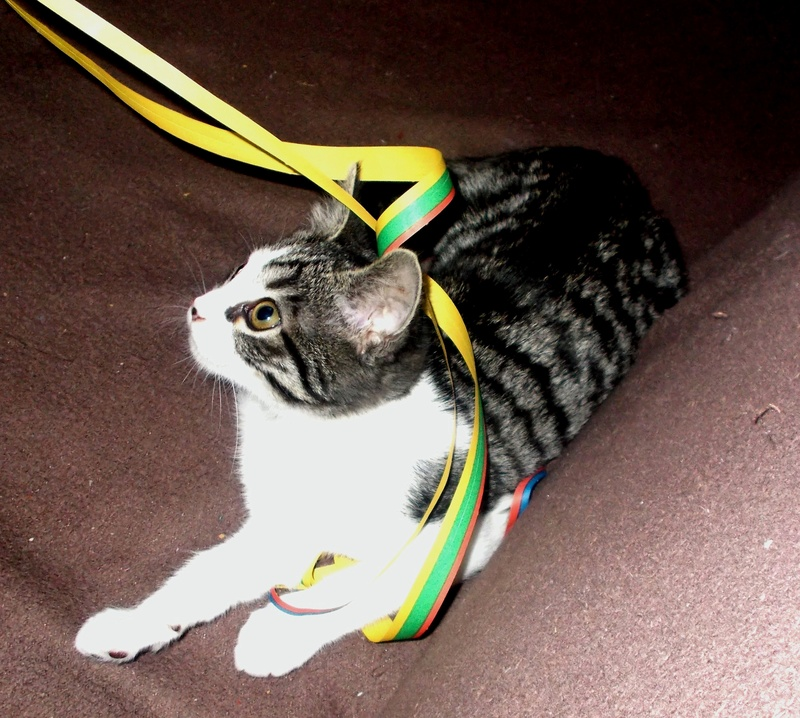 malouine - Malouine,  chatonne tigrée grise et blanche, née le 01/09/2016 Luna_p10