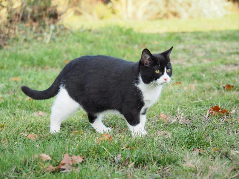 [CLOS]Visite post adoption Milo (chat) sur Betton Pb270127