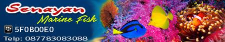 SENAYAN  MARINE FISH