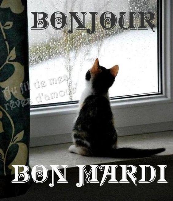 bonjour/bonsoir de Janvier - Page 2 C1160a11