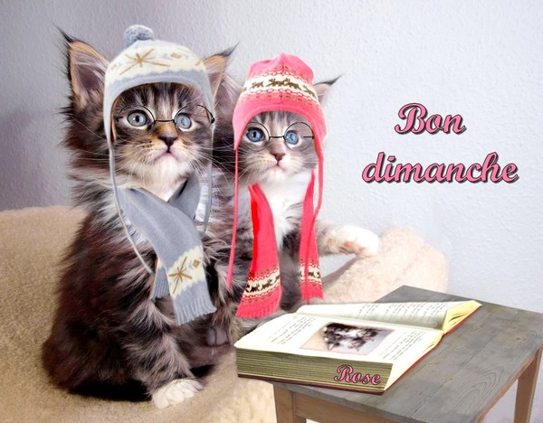 bonjour/bonsoir de Janvier - Page 4 Kdo-ro10