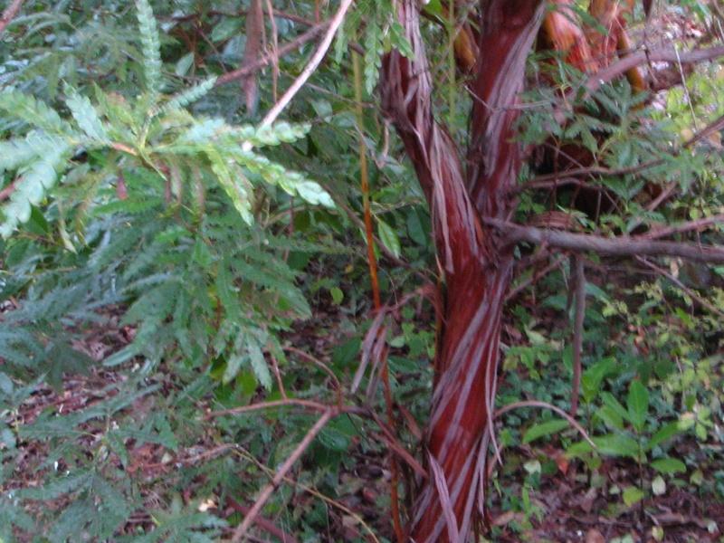 (29) Arboretum de Keracoual - Henvic  Lyonot10