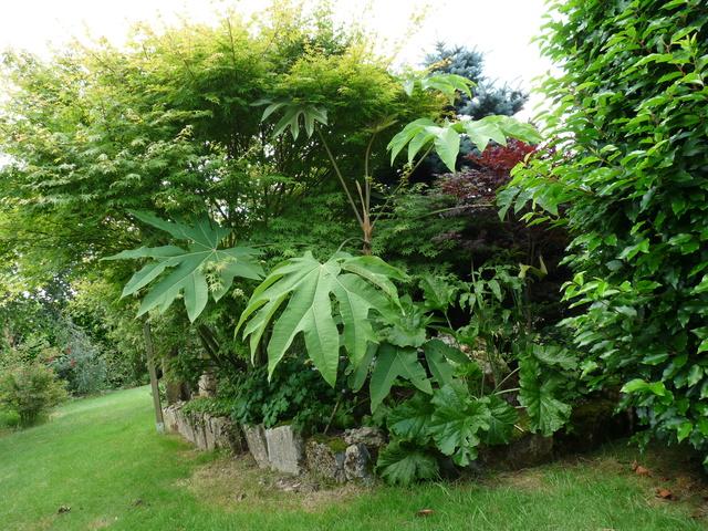 les voeux de mon jardin P1030311