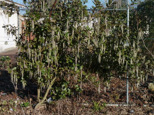 les voeux de mon jardin P1030815
