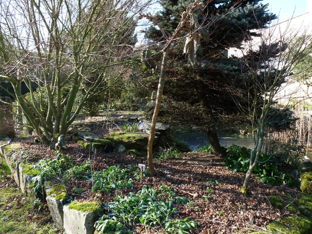 les voeux de mon jardin P1030818