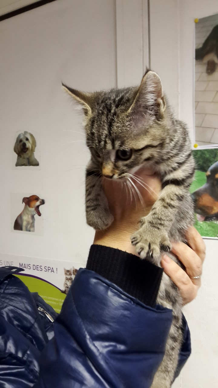adoption de HELOISE Thumbn19