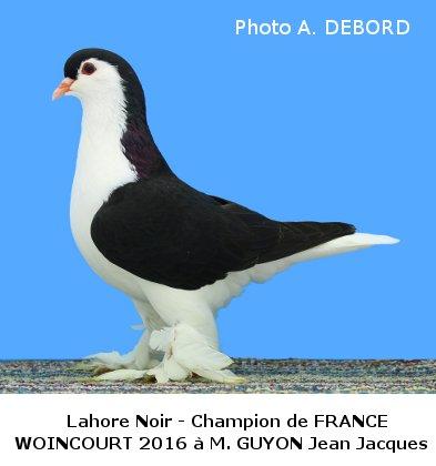 Le Pigeon LAHORE