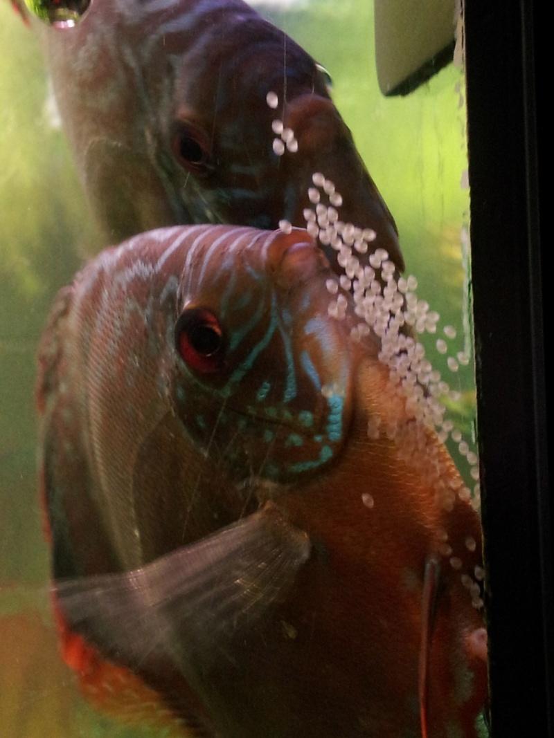 Surprise ! Ca pond  20121012