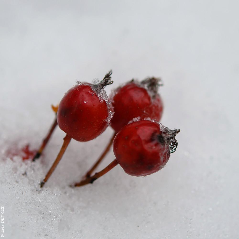 Graines, akènes, plume et neige Dsc_0126
