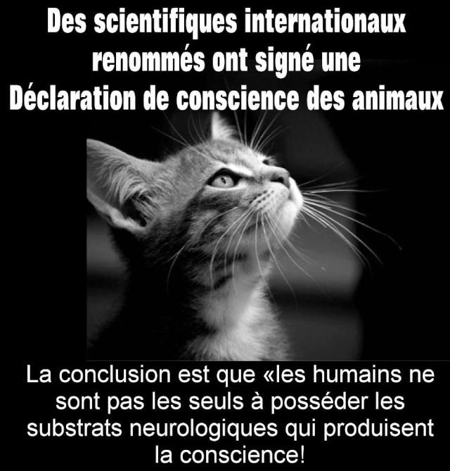 La conscience des animaux enfin reconnu 56169810