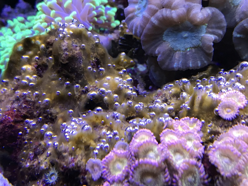 Probléme algues brunes. Img_0410