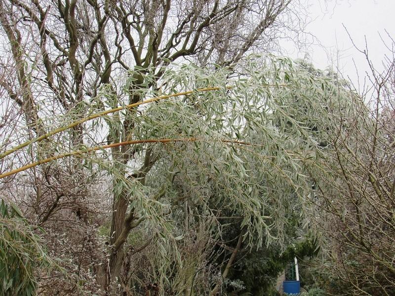 Ambiance et couleurs hivernales, décos naturelles Giv1011