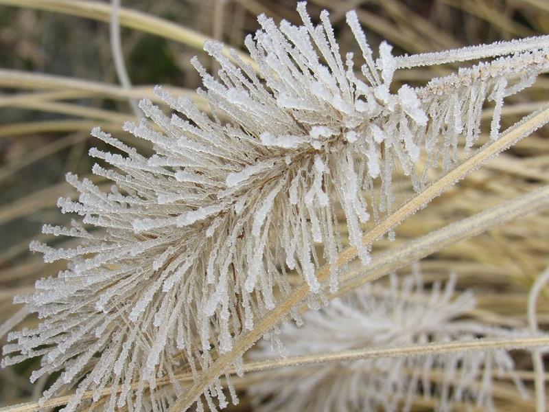 Ambiance et couleurs hivernales, décos naturelles Giv111