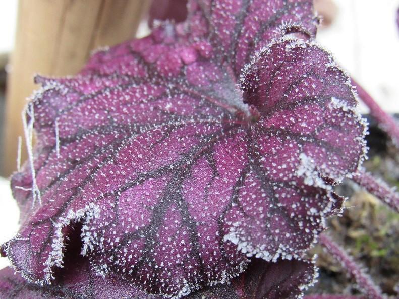 Ambiance et couleurs hivernales, décos naturelles Giv1111