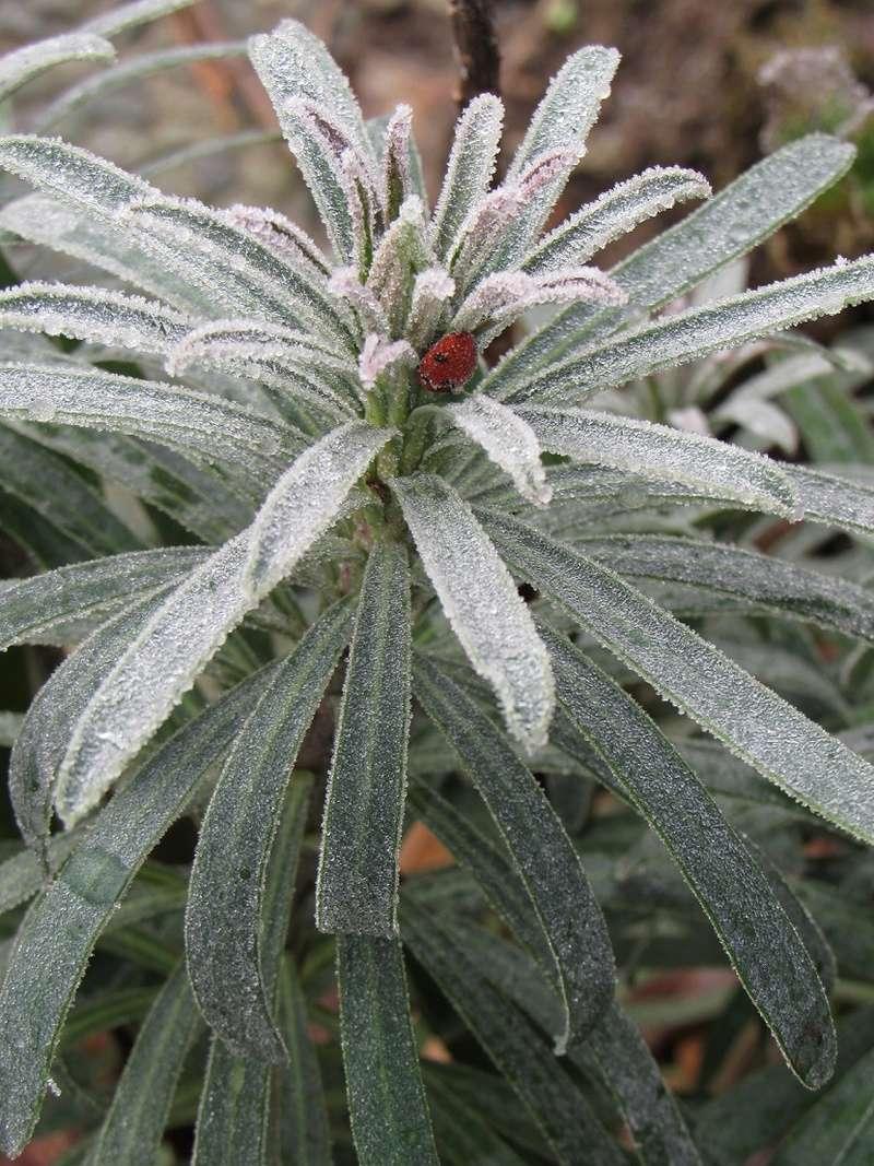 Ambiance et couleurs hivernales, décos naturelles Giv313