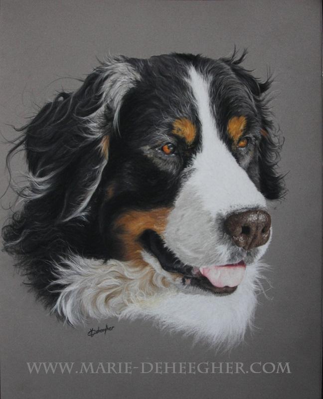Marie Deheegher - Artiste Animalier - Page 3 Abby10