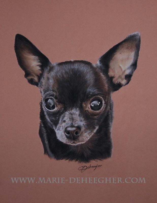 Marie Deheegher - Artiste Animalier - Page 3 Channe10