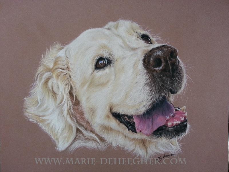 Marie Deheegher - Artiste Animalier - Page 3 Enzo_210