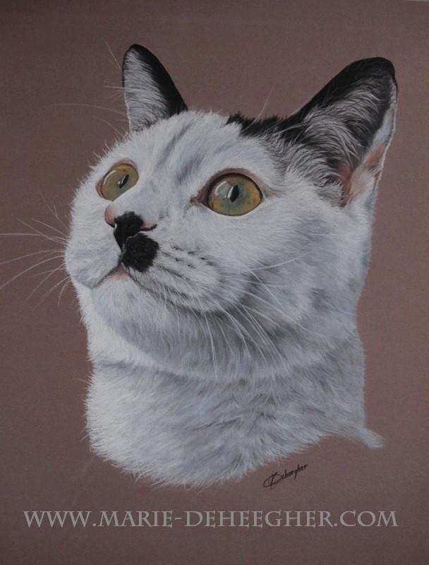 Marie Deheegher - Artiste Animalier - Page 3 Mousta10