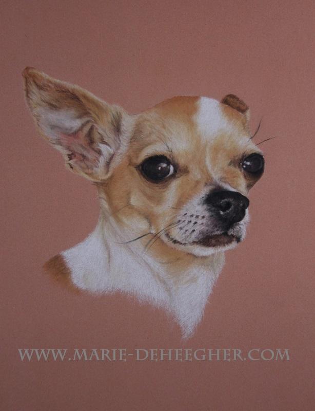 Marie Deheegher - Artiste Animalier - Page 3 Spyke10