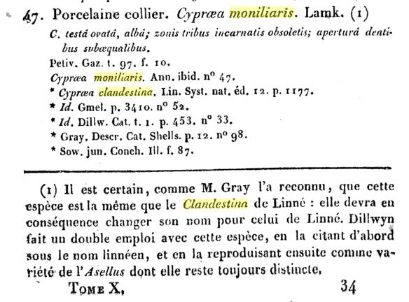 Palmadusta moniliaris - (Lamarck, J.B.P.A. de, 1810)  (Synonyme de clandestina) / absent du WoRMS au 29/07/18 Monili10