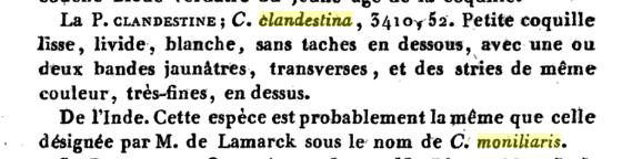 Palmadusta moniliaris - (Lamarck, J.B.P.A. de, 1810)  (Synonyme de clandestina) / absent du WoRMS au 29/07/18 Monili11