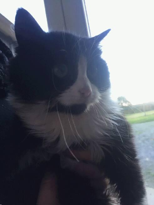 EXTRÊME URGENCE fourrière le 24 novembre pour 4 chats 110
