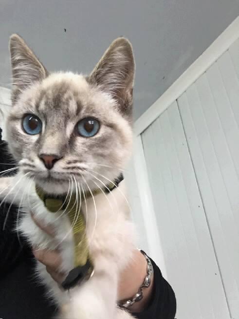 EXTRÊME URGENCE fourrière le 9 novembre pour 5 chats 14958210