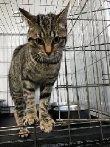 EXTRÊME URGENCE fourrière le 3 février pour une chatte 16425510