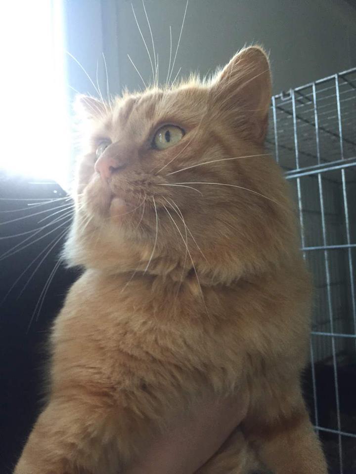 EXTRÊME URGENCE fourrière le 24 novembre pour 4 chats 410