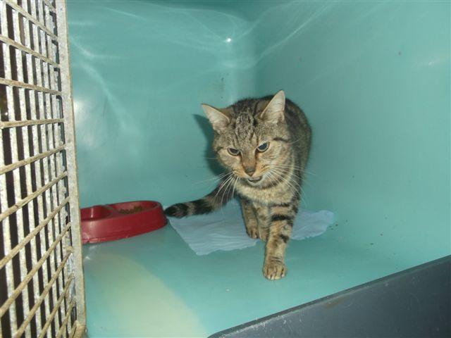 EXTRÊME URGENCE fourrière le 24 novembre pour 4 chats 411