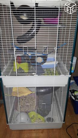 VENDS CAGE FURET TOWER Cage10