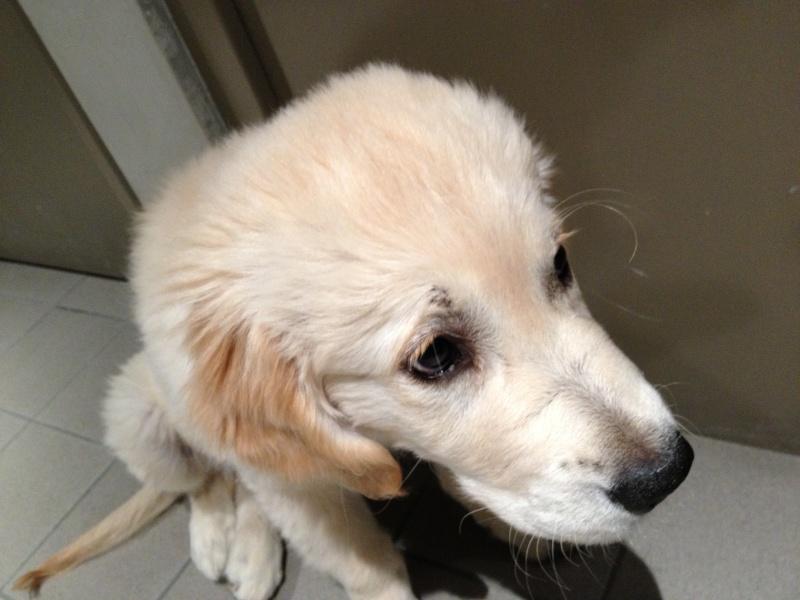 """Photos de vos chiens """"malheureux"""" Img_2210"""