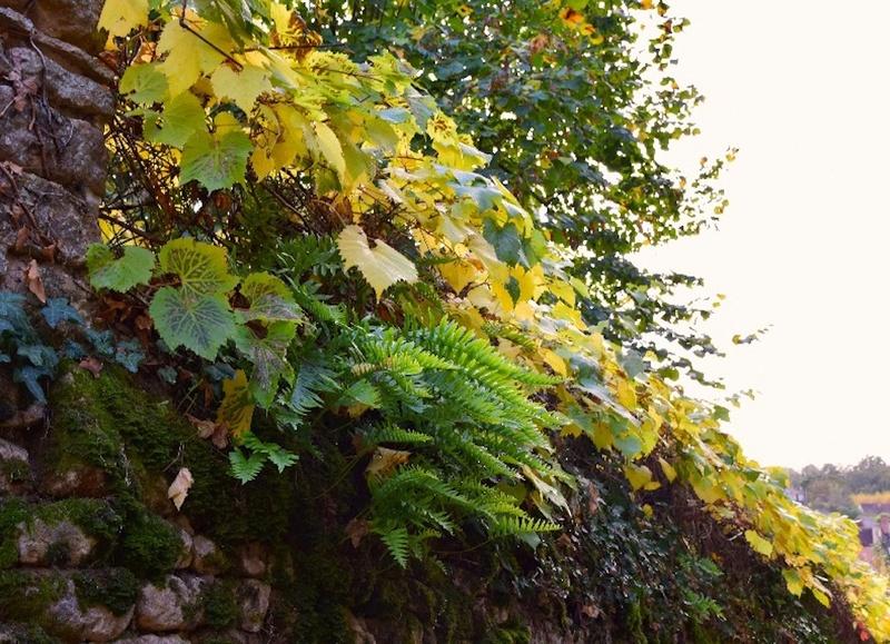 feuillages d'automne 2016 Dsc_0016