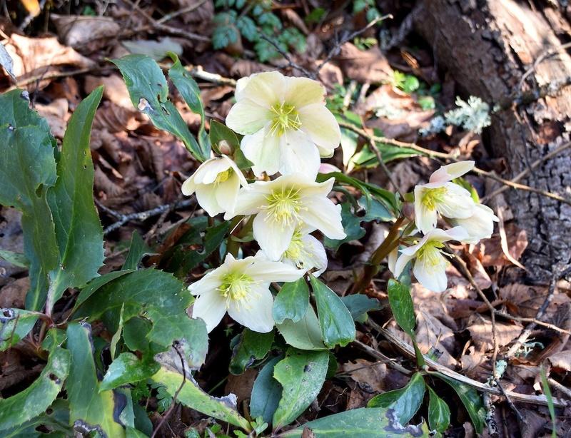 deux ou trois fleurs dans le vent Dsc_0023