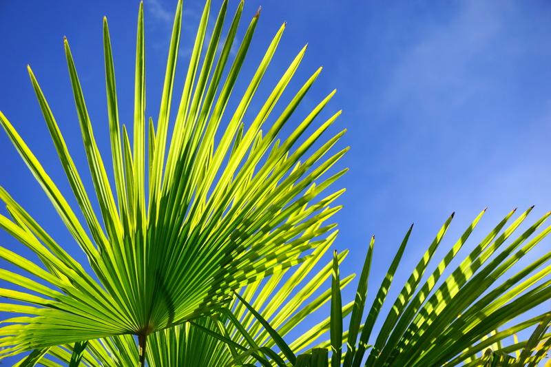 Palmier de Novembre Dsc05710