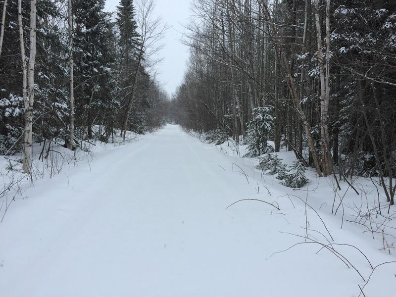 Stupid Winter! Img_1010