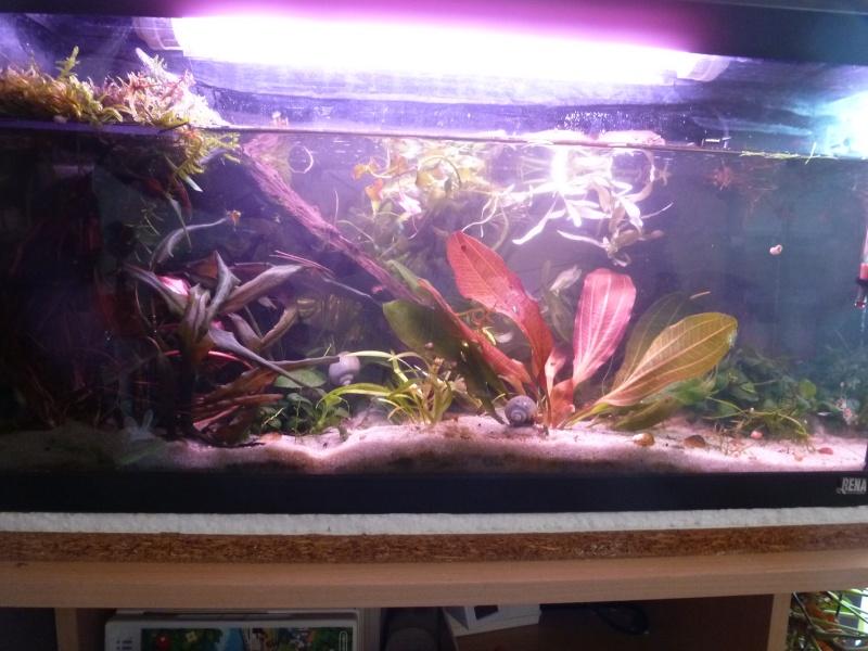 faire une plage d aquaruim en plexiglass pour tortue d eau P1020218