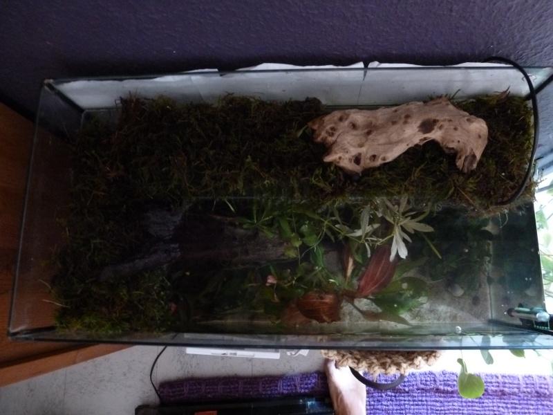 faire une plage d aquaruim en plexiglass pour tortue d eau P1020220
