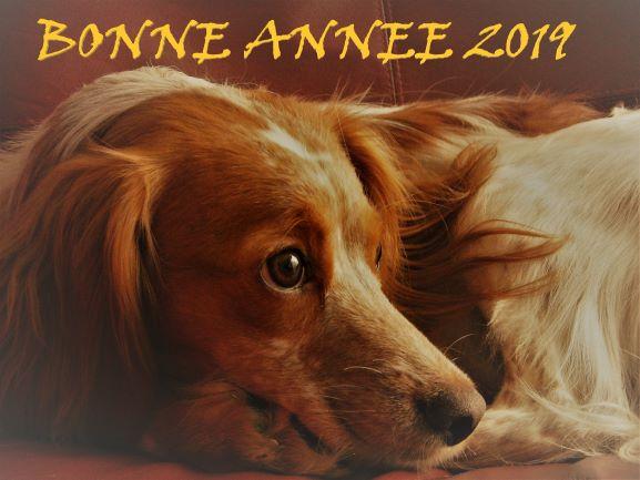 ILAYA - femelle X Beauceron - 2012 - UMA Bonne_11